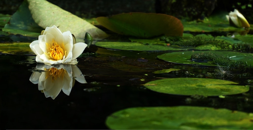 Pond Care: Choosing the Right Filtration System