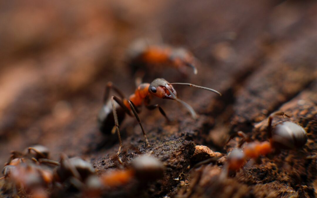 3 Tips to Deal With Princeton's Summer Pests